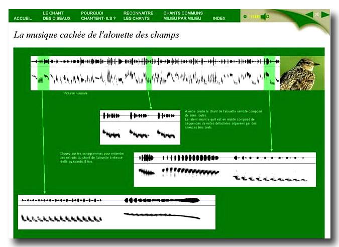 audiogramme.jpg