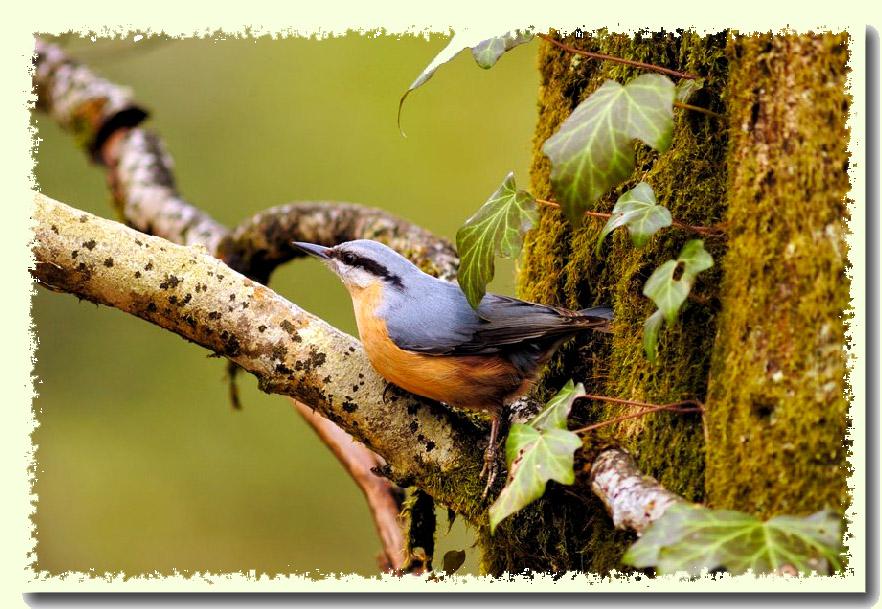 aide identification oiseaux